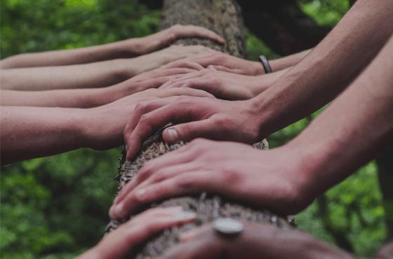 Ecologie mains qui touchent un arbre
